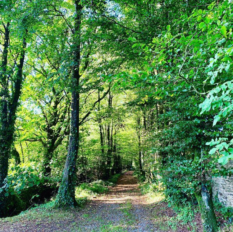 colmer-estate-woods